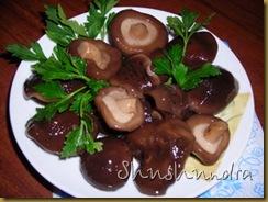 соленые грузди, засолка груздей, соление грибов, рецепт грузди