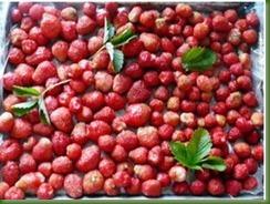 заморозка ягод, замороженные ягоды, как правильно заморозить, замороженная клубника, хранение ягод, ягоды на зиму, шоковая заморозка